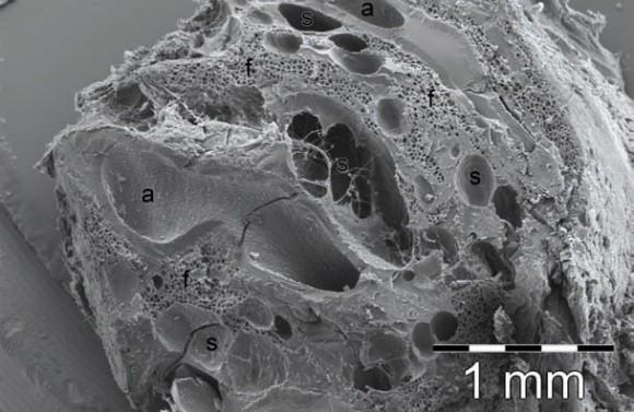 2. Изображение, полученное на сканирующем электронном микроскопе