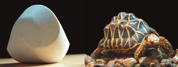 Арнольд, гёмбёц и черепаха