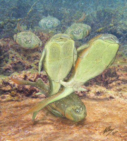 3. Во время оплодотворения Microbrachius (слева) располагались бок о бок, сцепившись плавниками. картину нарисовал один из исследователей,  Брайан Чу (Brian Choo), на основании более лаконичной реконструкции  (Long et al., 2014, внизу)
