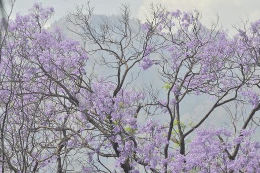 Весна в отрогах Пир-Панджала. Фото А.В. Андреева