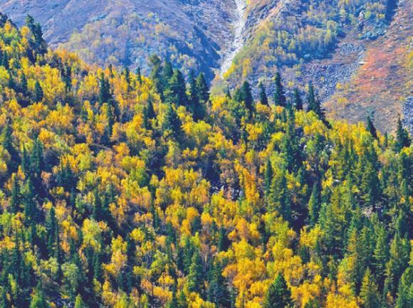 Лес. Ракчам. 2 октября 2011 года. Фото А. Андреева