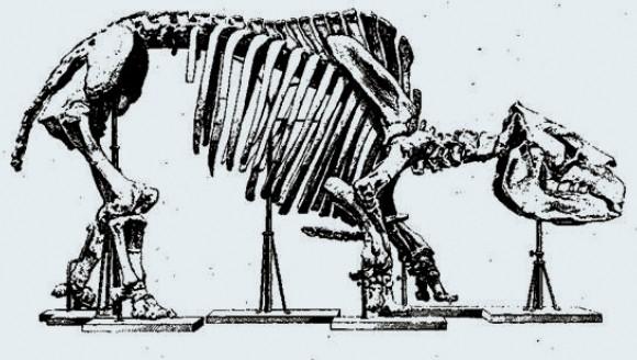 Скелет токсодона