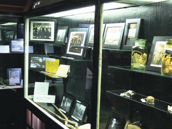 Выставка к юбилею Победы в залах Зоологического музея МГУ