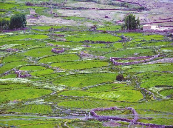 Мозаика сельскохозяйственных полей. Фото А. В. Андреева