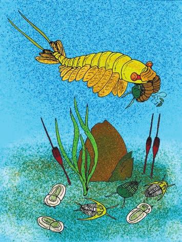 Ископаемое членистоногое Anomalocaris saron, охотящееся на трилобитов Yunnanocephalus Yunnanensis. Илл.: Wikimedia Commons
