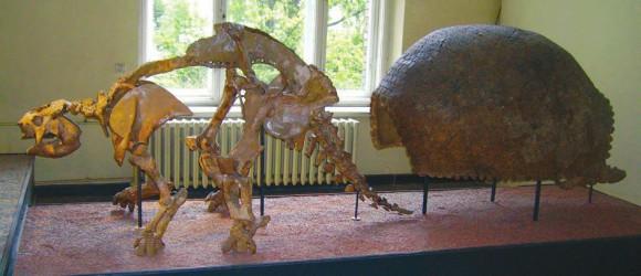 Рис. 1. Скелет и панцирь глиптодона (Музей естествознания, Берлин). «Википедия»