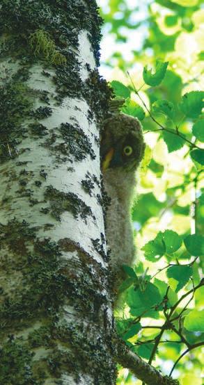 Другой птенец смотрел на людей из-за ствола дерева