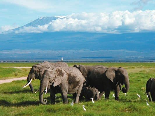 Слоны в кенийском национальном парке Амбосели. Фото M. Disdero