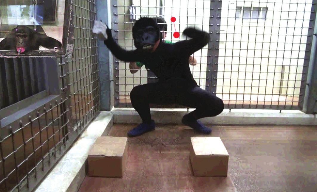 2. Кинг-Конг — супергерой или злодей, который обманывает человека на глазах у обезьяны (www.newscientist.com)