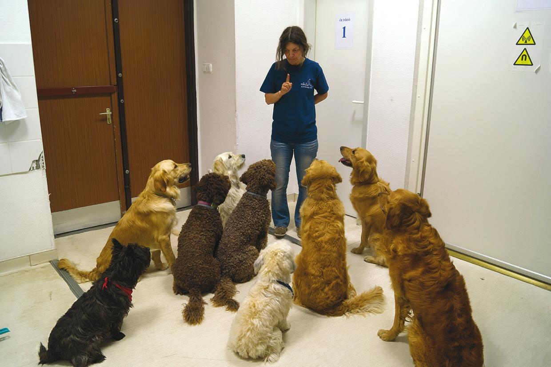 Собаки слушают своего инструктора