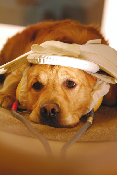 Собака (Барак) лежит на кушетке томографа
