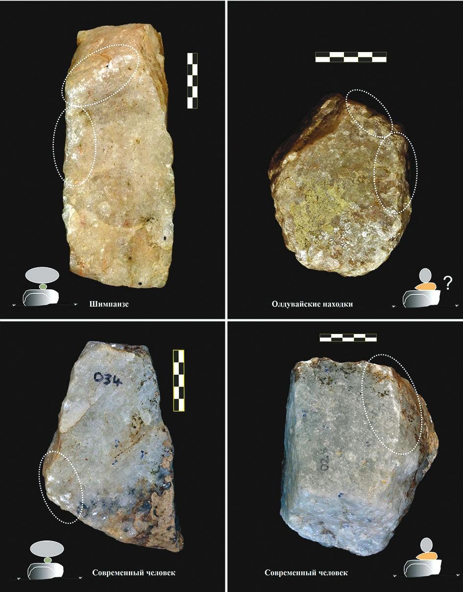 Рис. 4. Камни, оббитые при колке орехов разной формы (Arroyo et al., 2016)