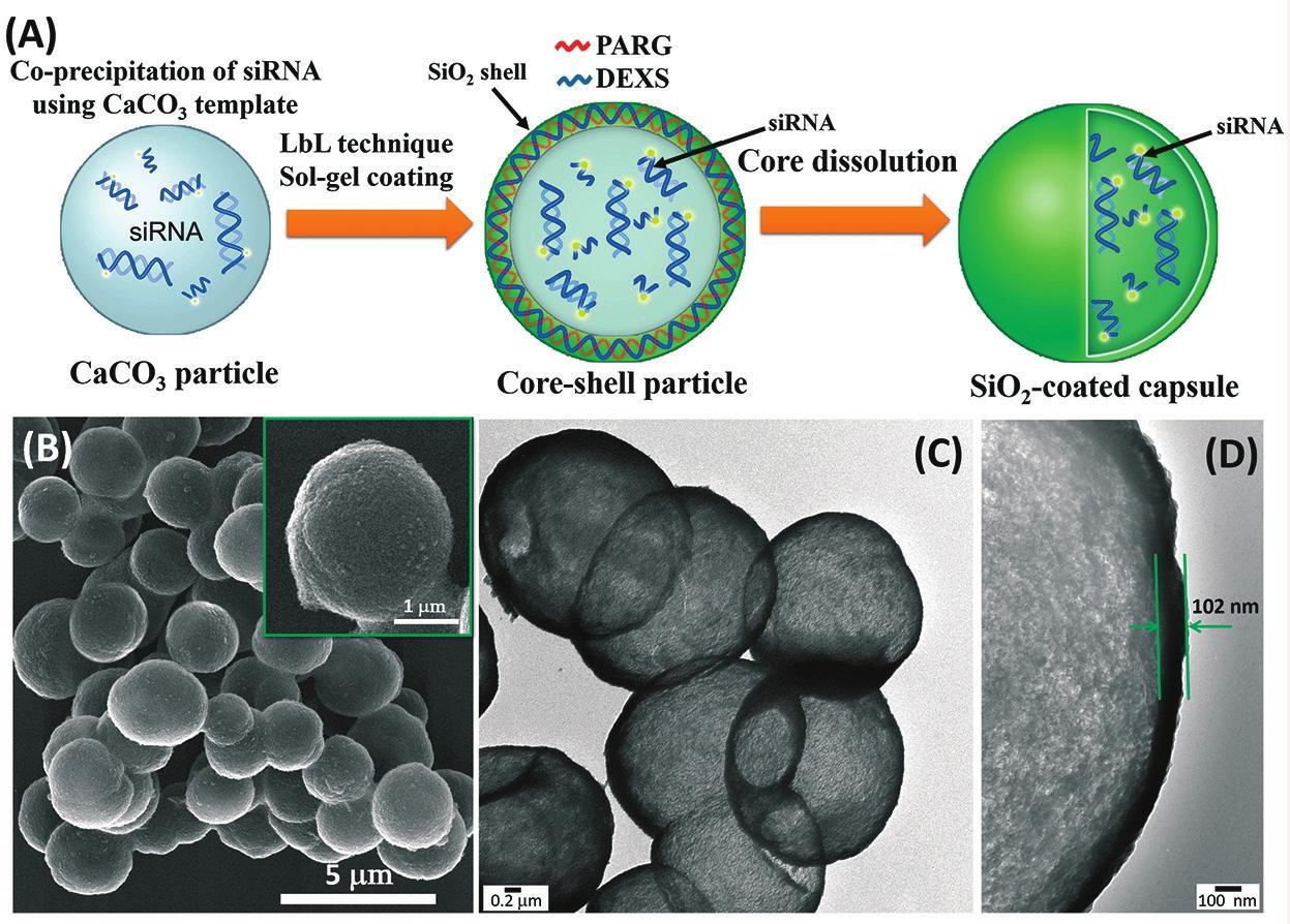 А. Образование гибридного наноконтейнера и инкапсуляция микроРНК; B. Наноконтейнер под микроскопом; C, D. Пустые наноконтейнеры