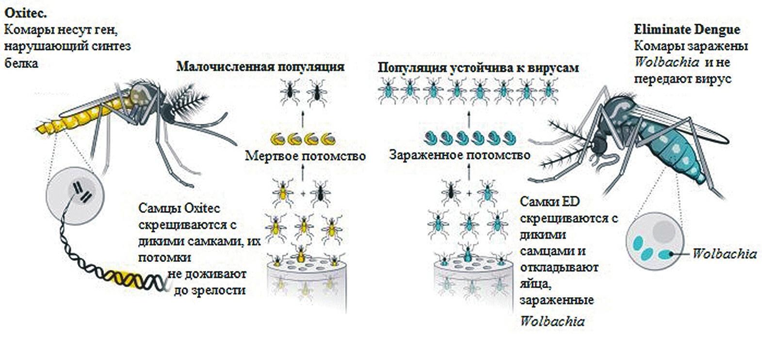 Сравнение программ Oxitec и Eliminate Dengue (www.sciencemag.org)