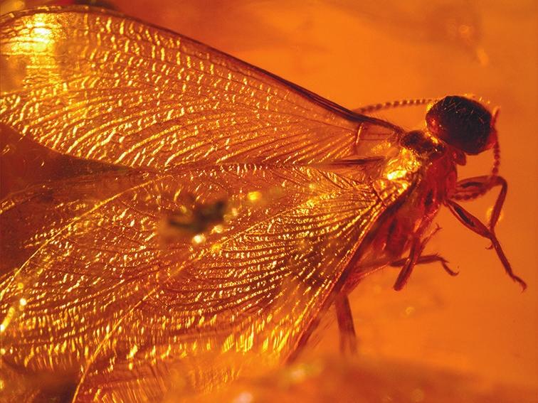 Рис. 4. Крылатый термит из включения в янтаре. Образец и фото В. А. Гусакова