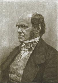 Чарлз Дарвин (1854?). С сайта http://darwin-online.org.uk