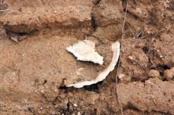 Остатки человеческого черепа в бульдозерной колее.