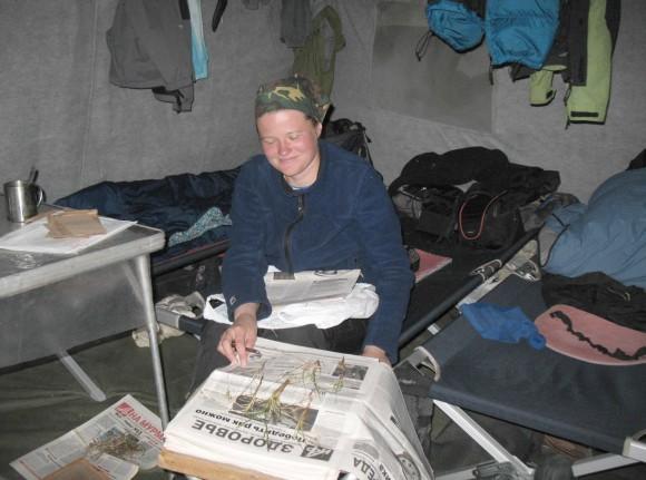 Ежедневная перекладка гербария в поле — залог его сохранности