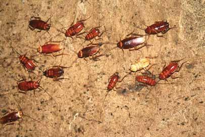 Мэрские тараканы нашей столицы - Троицкий вариант