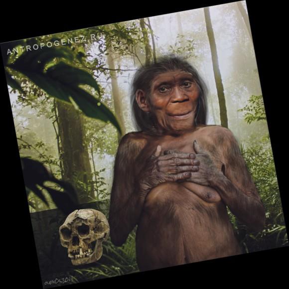 Реконструкция Homo floresiensis, автор Олег Осипов