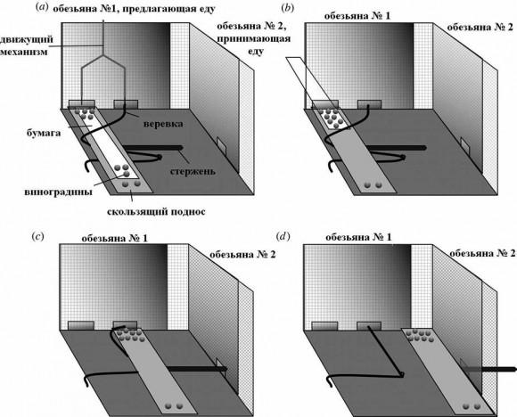 Рис. 3. С помощью этого устройства исследователи выясняли, каковы понятия шимпанзе о справедливости (объяснения в тексте)