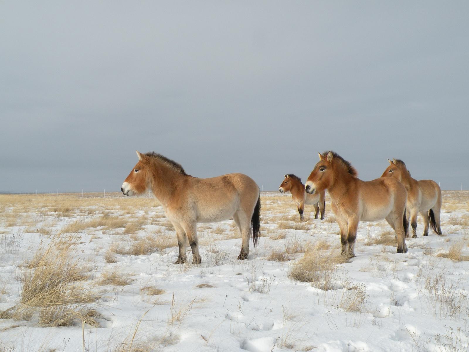 Арабские лошади — лучшие скакуны: описание, фото, истории   1200x1600