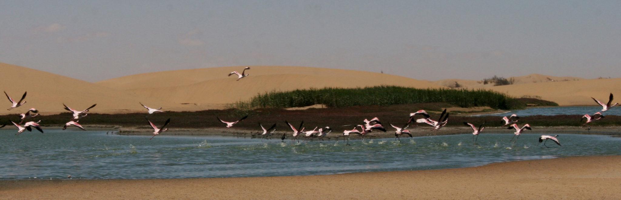Птичий санктуарий в окрестностях Уолфиш-Бея. Фотография Н. Вихрева