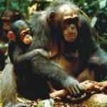 Женское образование в мире животных