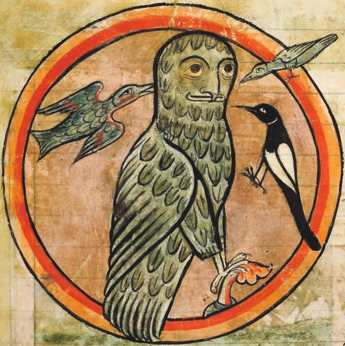 Птицы окрикивают сову
