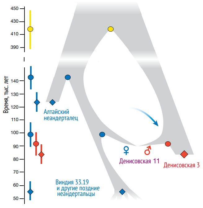 Обмен генами между  неандертальцами и денисовцами (Nature)