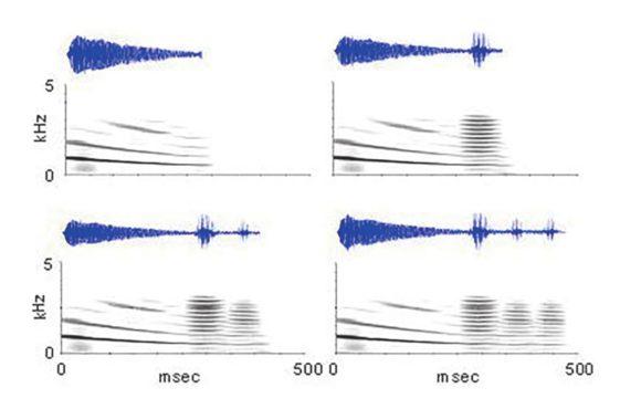 Рис. 2. Осцилограммы и спектрограммы брачных сигналов разной сложности: простое скуление (наверху слева) и скуление с одним, двумя или тремя кудахтаньями (Ryan et al., 2018)