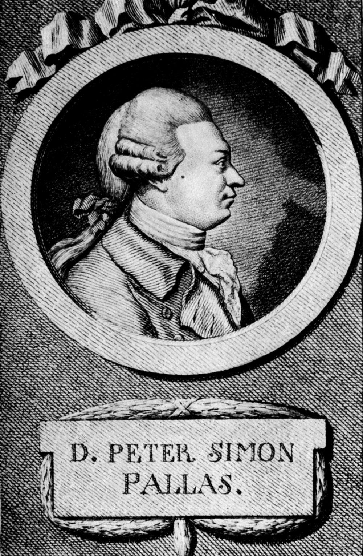 П. С. Паллас в молодости (около 1767?)