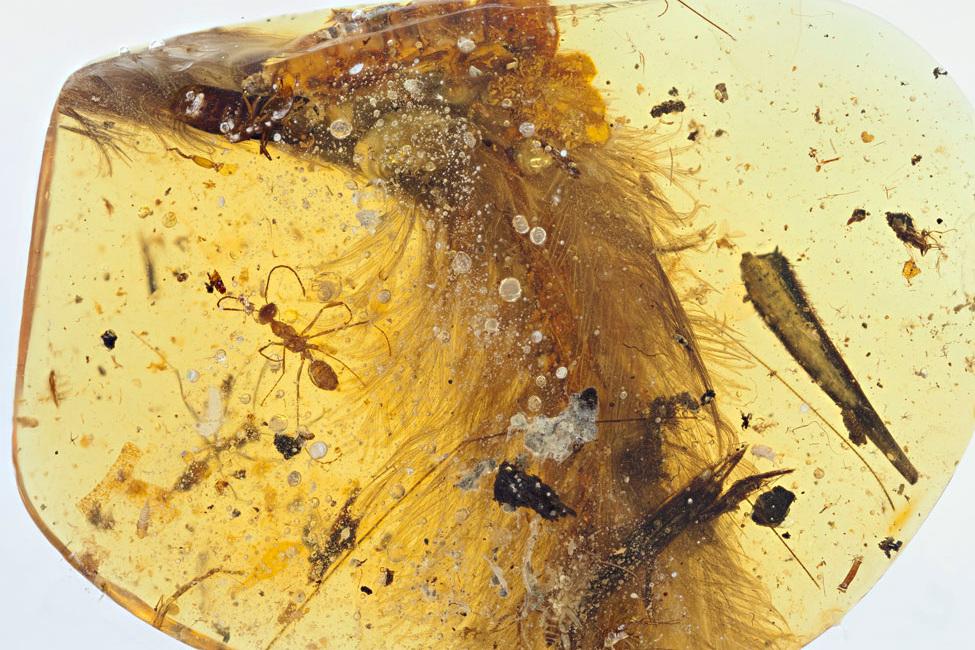 Хвост целурозавра. Royal Saskatchewan Museum (R.C. McKellar)