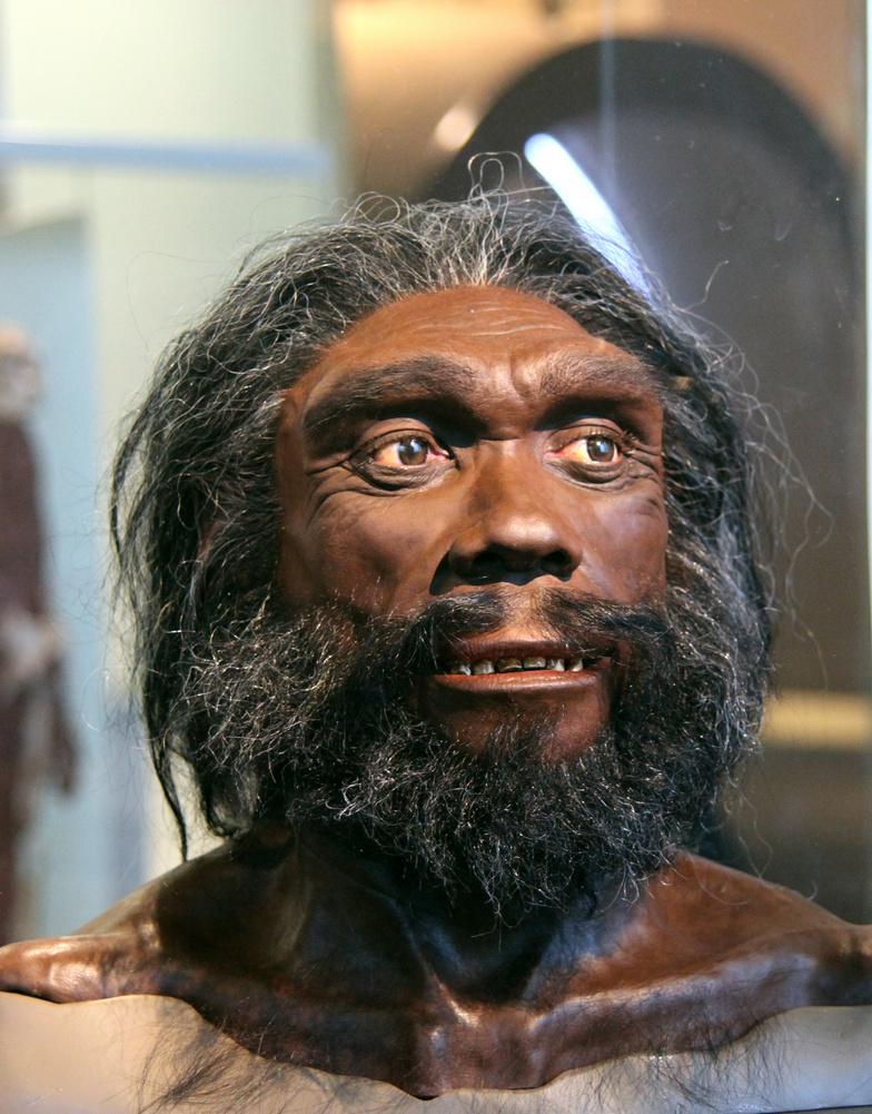 Homo heidelbergensis (муляж). Национальный музей естественной истории (США)
