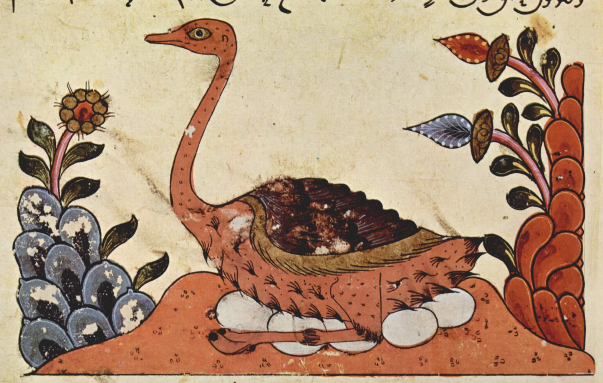 Изображение сирийского страуса из «Книги о животных» Аль-Джахиза. Сирия, XIV век