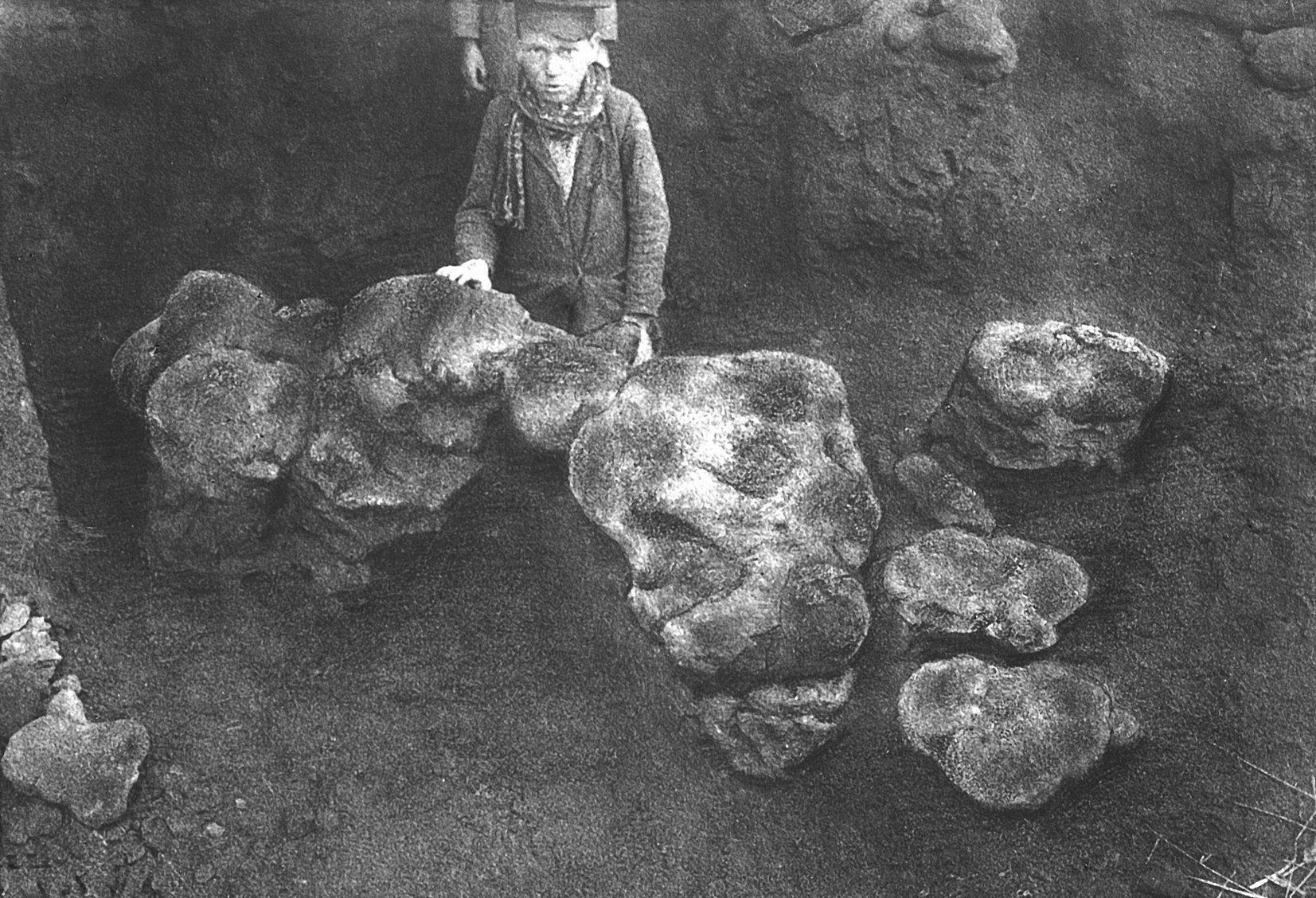 Конкреция с черепом парейазавра. Фото В. П. Амалицкого
