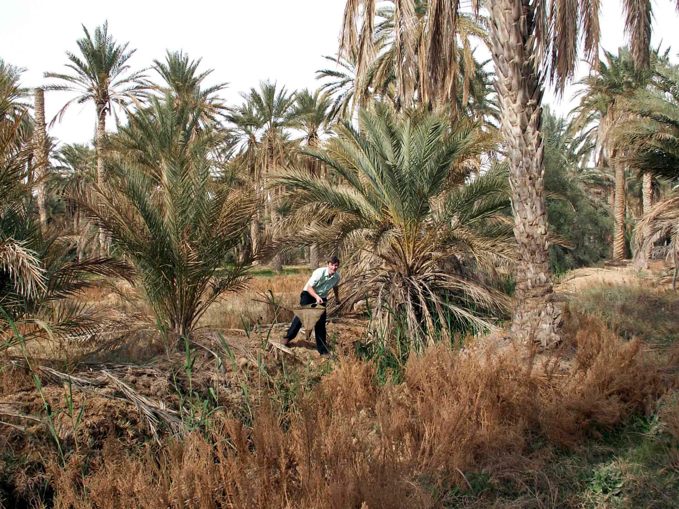 В оазисе Дуз, Тунис. Фото Л. Я. Боркина. 15.03.2005