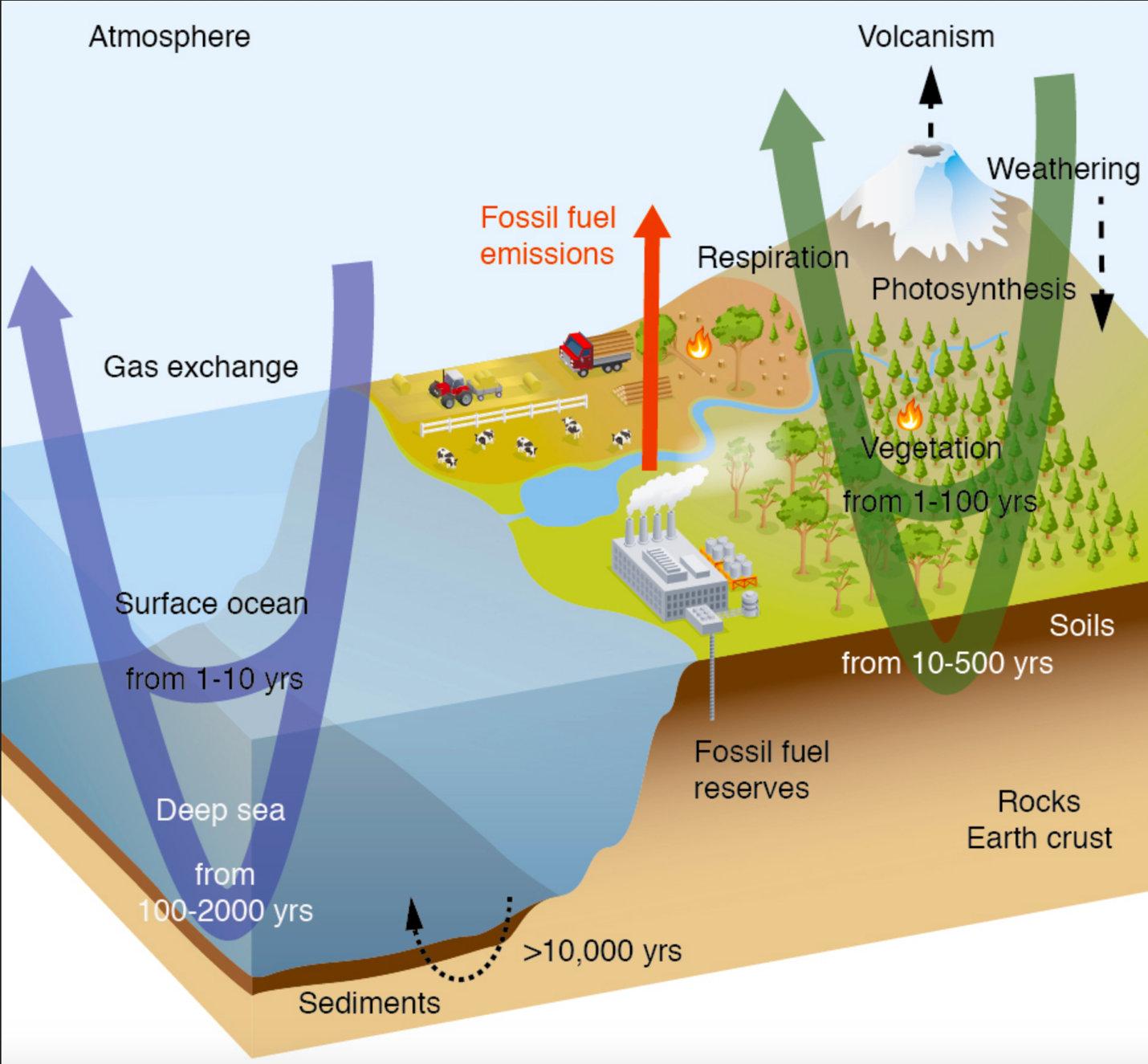 Рис.2. Упрощенная схема глобального углеродного цикла, показывающая типичные временные масштабы оборота переноса углерода через основные резервуары. Источник:ipcc.ch/site/assets/uploads/2018/02/WG1AR5_Chapter06_FINAL.pdf