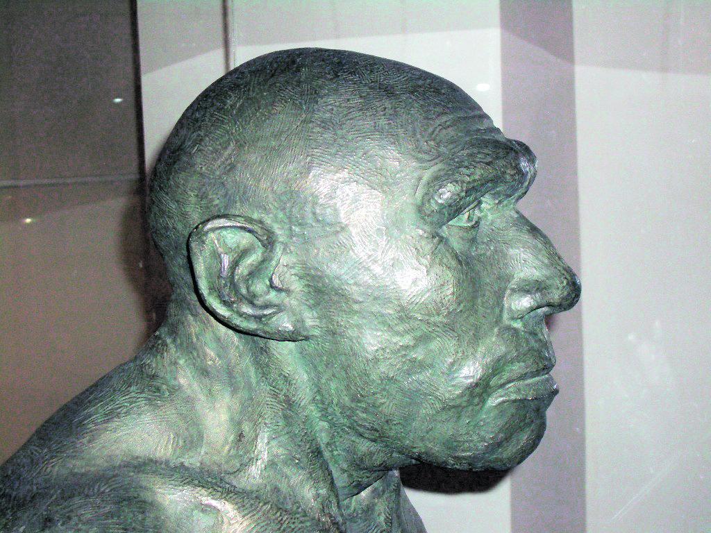 Неандерталец из Ла-Ферраси (Франция). Реконструкция М. М. Герасимова (Дарвиновский музей)