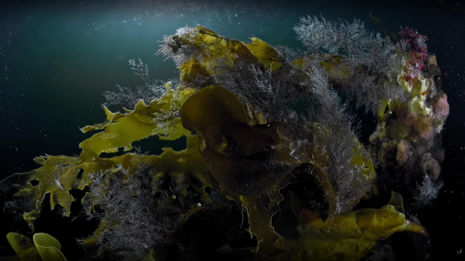 Кадр из фильма «Жизнь подо льдом»