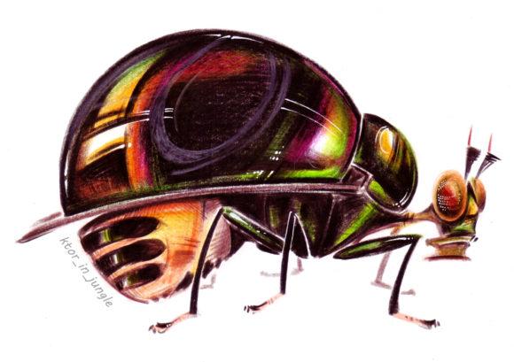 Самка мухи сем. Celyphidae (нацпарк Фонгня)