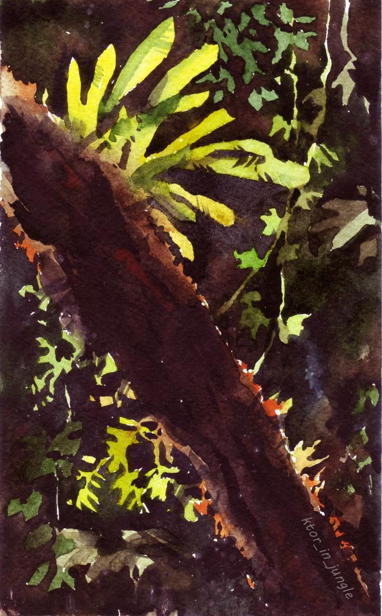 Папоротник Asplenium nidum (нацпарк Каттиен)