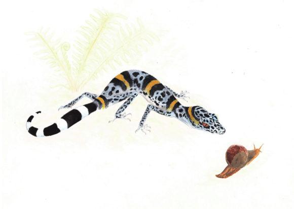 Гониурозавр Луи. 2012 год. 21 × 29,7 см. Бумага, гуашь, карандаш