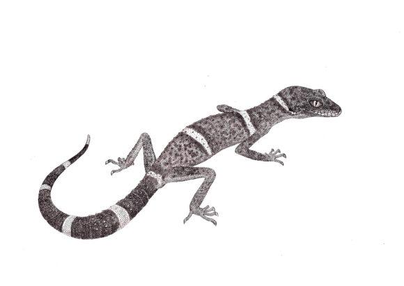 Гониурозавр Лихтенфельдера. 2012 год. 21 × 29,7 см. Бумага, тушь