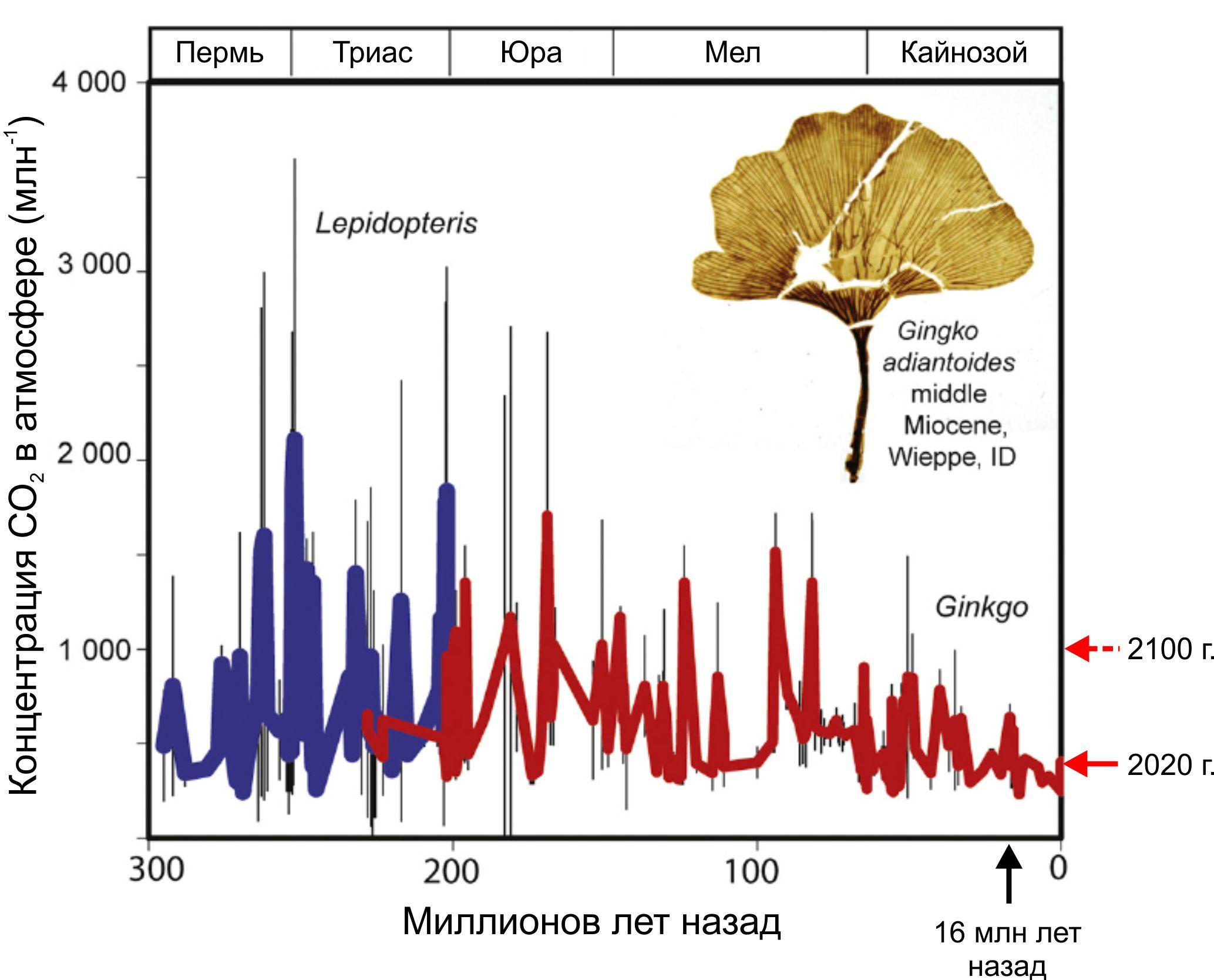 Изменения концентраций CO2 в атмосфере Земли за последние 300 млн лет, оцененные по устьичному индексу листьев гинкговых (Ginkgo) и вымерших семенных папоротников (Lepidopteris)