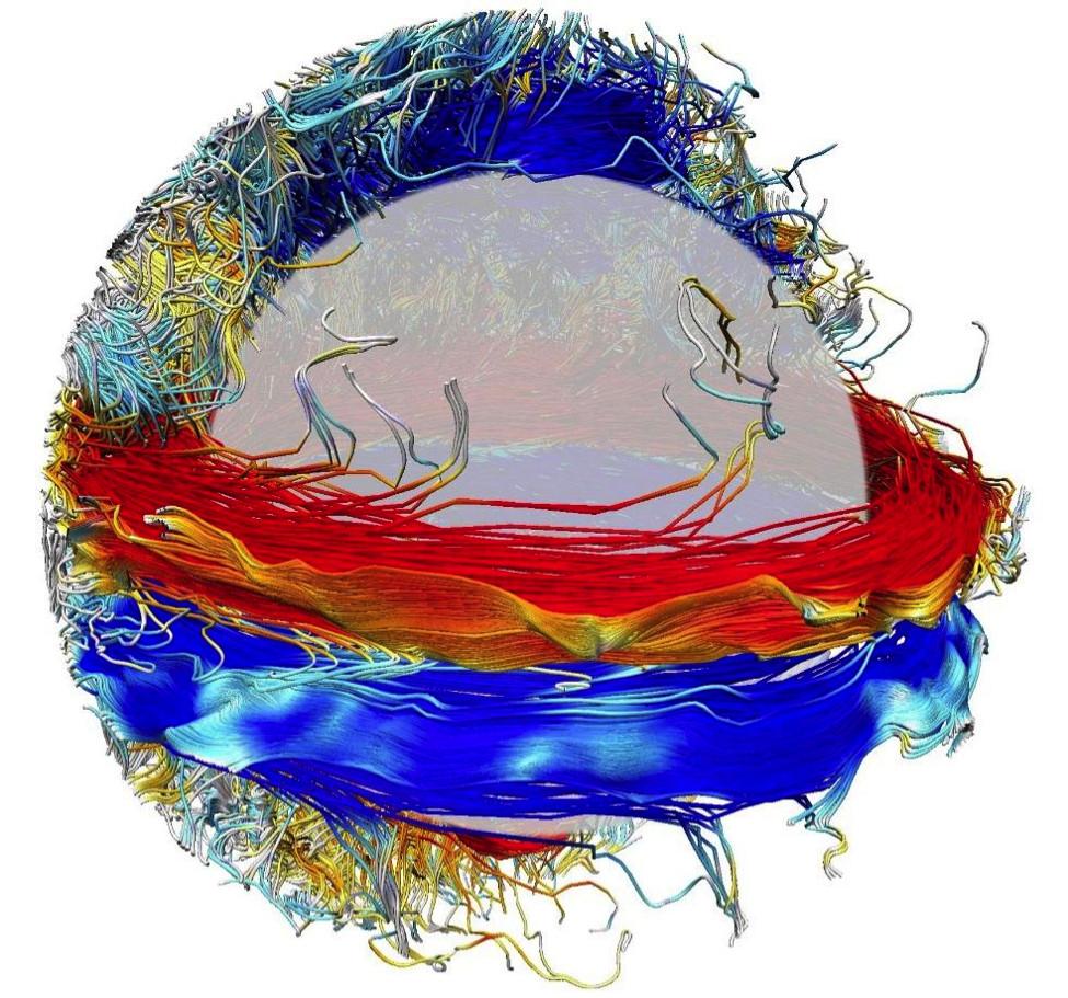 Рис. 1. Результат численного 3D-моделирования солнечного магнитного поля. Цвет маркирует направление магнитных силовых линий. Из статьи [1]