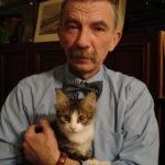 Про котов и кошек