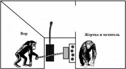 Рис. 2. Тому, кто украл у обезьяны еду, она отомстит, если имеет на это право