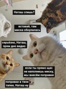 miska_obnulilas.jpg
